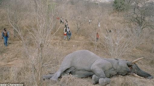 Crudas imágenes revelan el hambre en la población de Zimbabue