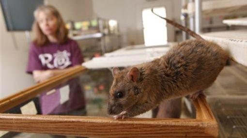 Plaga de ratones en casa como eliminar ratones remedios trampas ultrasonido with plaga de - Ratones en casa ...