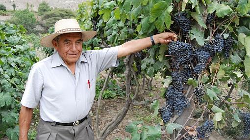 El pisco de uvina se gana un lugar en la industria nacional