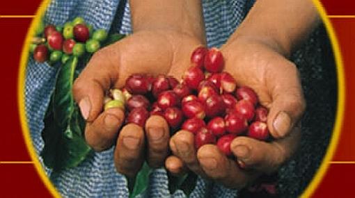 Sepa dónde puede probar en Lima el mejor café especial del mundo