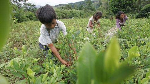 Realidad peruana: hay 4,5 millones de menores de 5 a 17 años que trabajan