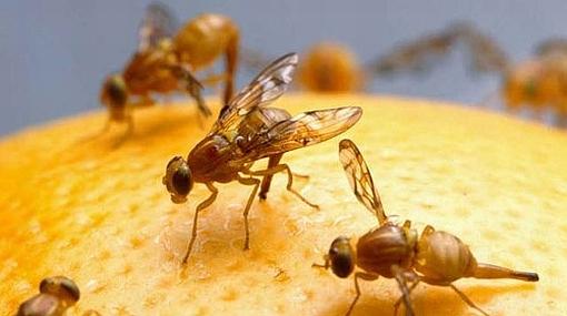 Rechazados en el sexo, los moscones recurren al alcohol