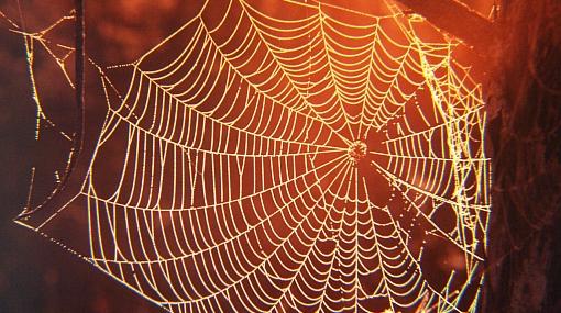 Nuevos descubrimientos sobre la estructura y formación de la tela de araña