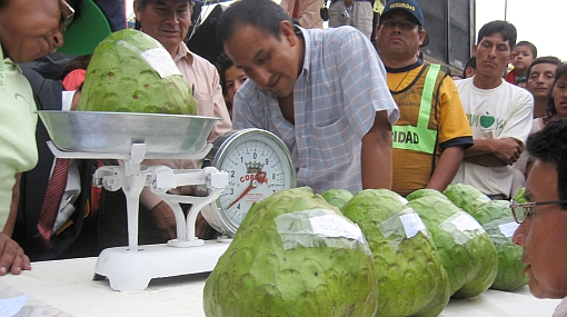 Todo un récord: presentarán chirimoya de 5 kilos en Huarochirí