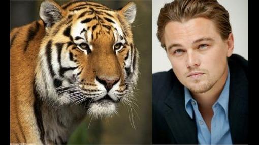Leonardo Di Caprio quiere salvar los tigres de Asia