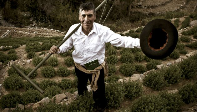 El orégano: el cultivo que mejora la vida de cientos de agricultores peruanos