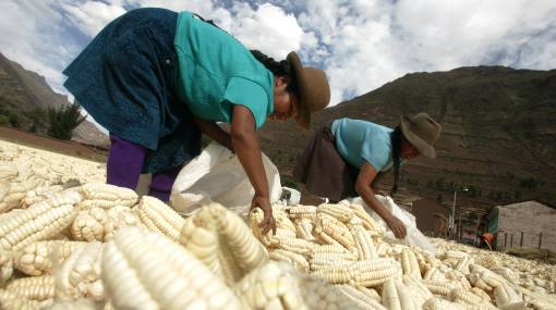 Cuatro propuestas peruanas brillarán en publicación creada para combatir la desnutrición