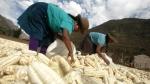Cuatro propuestas peruanas brillarán en publicación creada para combatir la desnutrición - Noticias de tortitas de papa