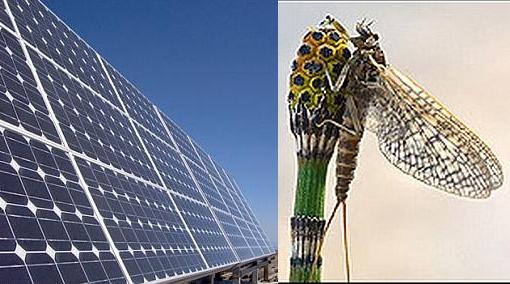 Conozca el lado oscuro de los paneles solares