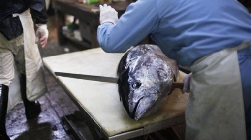 Mercado de Tokio vende su mayor atún rojo en 24 años por 28 mil euros