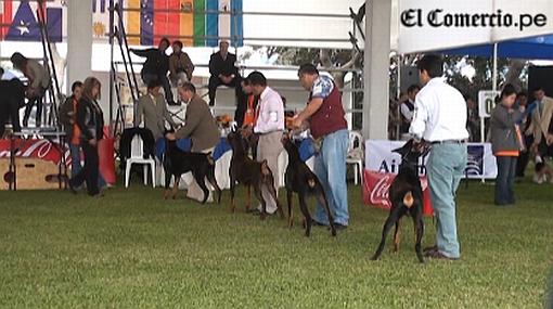 Perros de alcalde Luis Castañeda ganaron en concurso internacional de razas