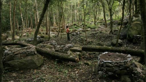 El Perú pierde anualmente 150 mil hectáreas de bosques a causa de la deforestación