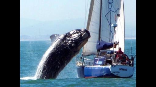 De Ripley: turistas salvaron de morir luego que ballena saltara sobre su yate