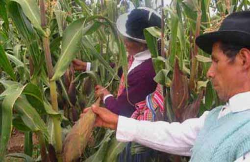 Valle del Mantaro soportará temperaturas de hasta -4 grados durante Fiestas Patrias