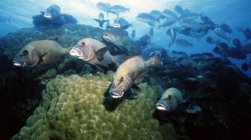 """El """"Amazonas marino"""" está en riesgo de desaparecer a causa del calentamiento global, según WWF"""