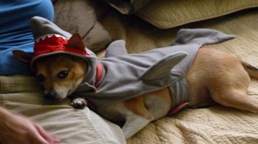 Perros y gatos con curiosos disfraces de tiburón