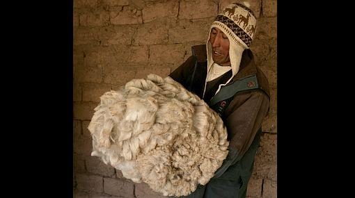 Programa de crianza de camélidos en comunidades altoandinas le hace la pelea a la ola de frío