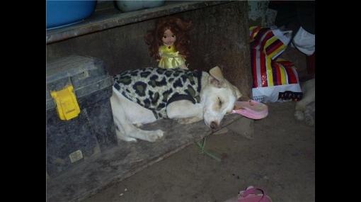 No compres mascotas, anímate a adoptar una