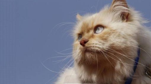 Gatos asilvestrados contribuyen a extinción de animales insulares