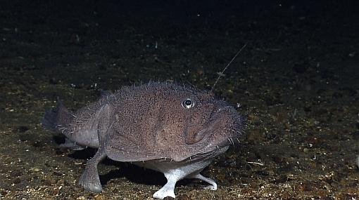 Científicos descubrieron 40 nuevas especies de flora y fauna en Indonesia