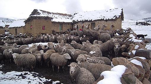 Habrá nevadas en regiones de la sierra central y sur, informó Senamhi