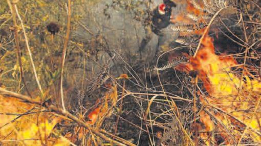 Reserva Yanachaga-Chemillén no fue afectada por incendio forestal