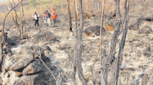 Incendios en Pasco han sido controlados en un 70%, según primeras evaluaciones