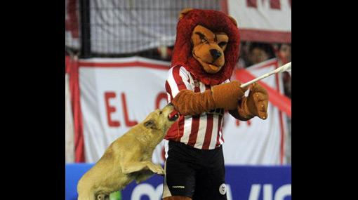 La mascota de Estudiantes también perdió en la Recopa: un perro casi se la come
