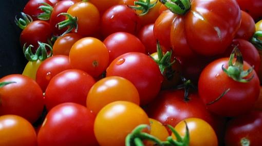 Tomate cereza: de elemento decorativo a protagonista gastronómico