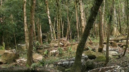 Talan ilegalmente 100 hectáreas de bosque en zona de conservación Cordillera Escalera