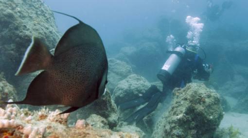 Antiguo buque de guerra de EE.UU. será el mayor arrecife artificial en la costa de Nueva Jersey