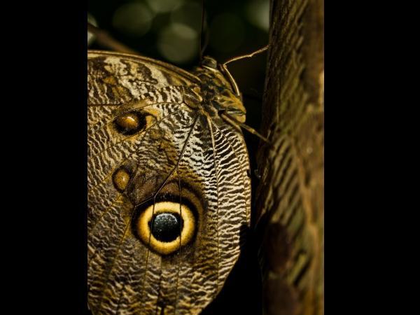 Descubre el fascinante mundo del camuflaje animal