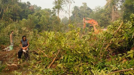 La conservación de la biodiversidad forestal ha mejorado, según informe