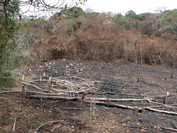 Incendios en Moyobamba ponen en riesgo a especies en peligro de extinción