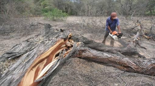 """Antonio Brack: """"Para el 2021 esperamos reducir a cero la deforestación en la Amazonía y costa norte"""""""