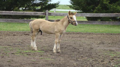 Argentina se convirtió en el primer país latinoamericano en clonar un caballo