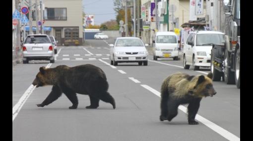 Osos salvajes se pasearon libres por calles de Japón