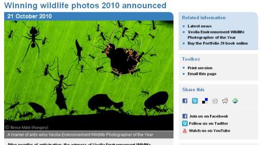 Sorprendente imagen de hormigas comiendo una hoja ganó premio a mejor fotografía de naturaleza 2010