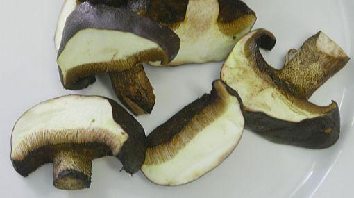 Pródiga naturaleza: conozca más sobre los hongos comestibles peruanos
