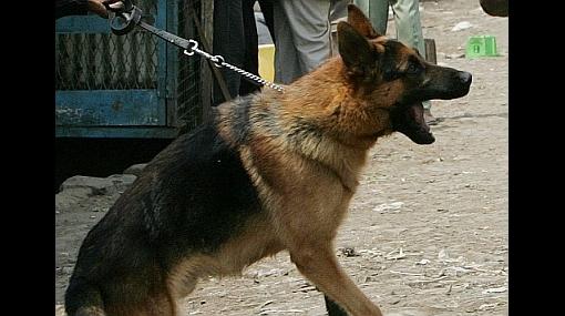 De locos: perro antidrogas detuvo a un gato que intentaba ingresar con heroína a un penal