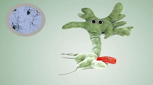 ¿Te gustaría tener un peluche en forma de microbio?