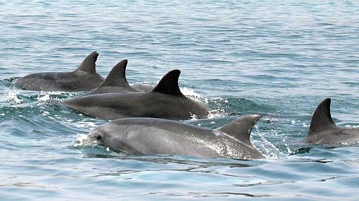 FOTOS: presencia de delfines saca a la luz otro tema de preocupación frente a proyecto de puerto de Ancón