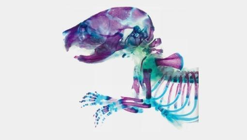 Un japonés utiliza animales disecados para crear obras de arte