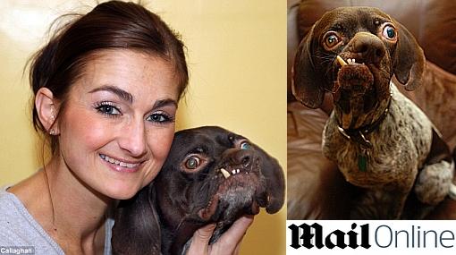 El perro más feo de Reino Unido encontró un hogar amoroso