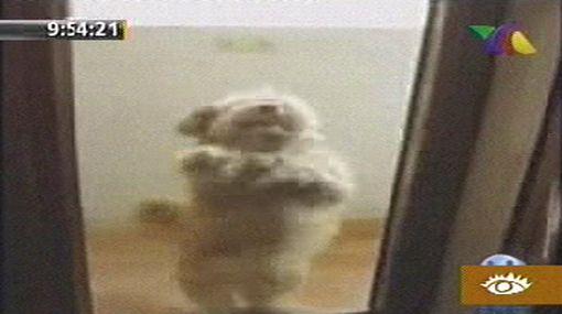 Un perro que baila salsa es la sensación de YouTube