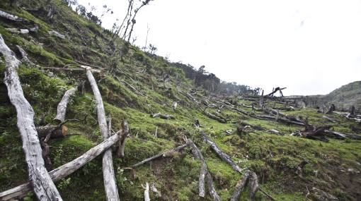 La deforestación mundial se ha reducido en un 37% en los últimos 10 años