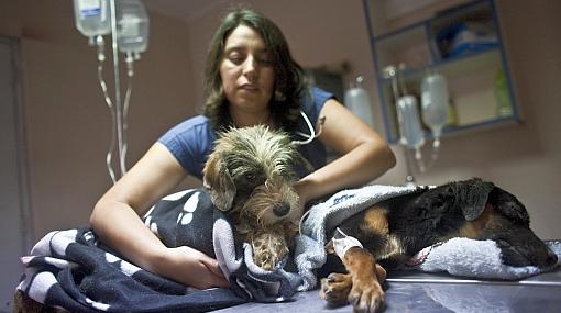 Todos los perros abandonados en casa de Cercado fueron rescatados y 17 ya encontraron hogar