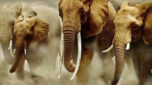Colmillos de elefante valorizados en 330 mil dólares fueron incautados en Tailandia