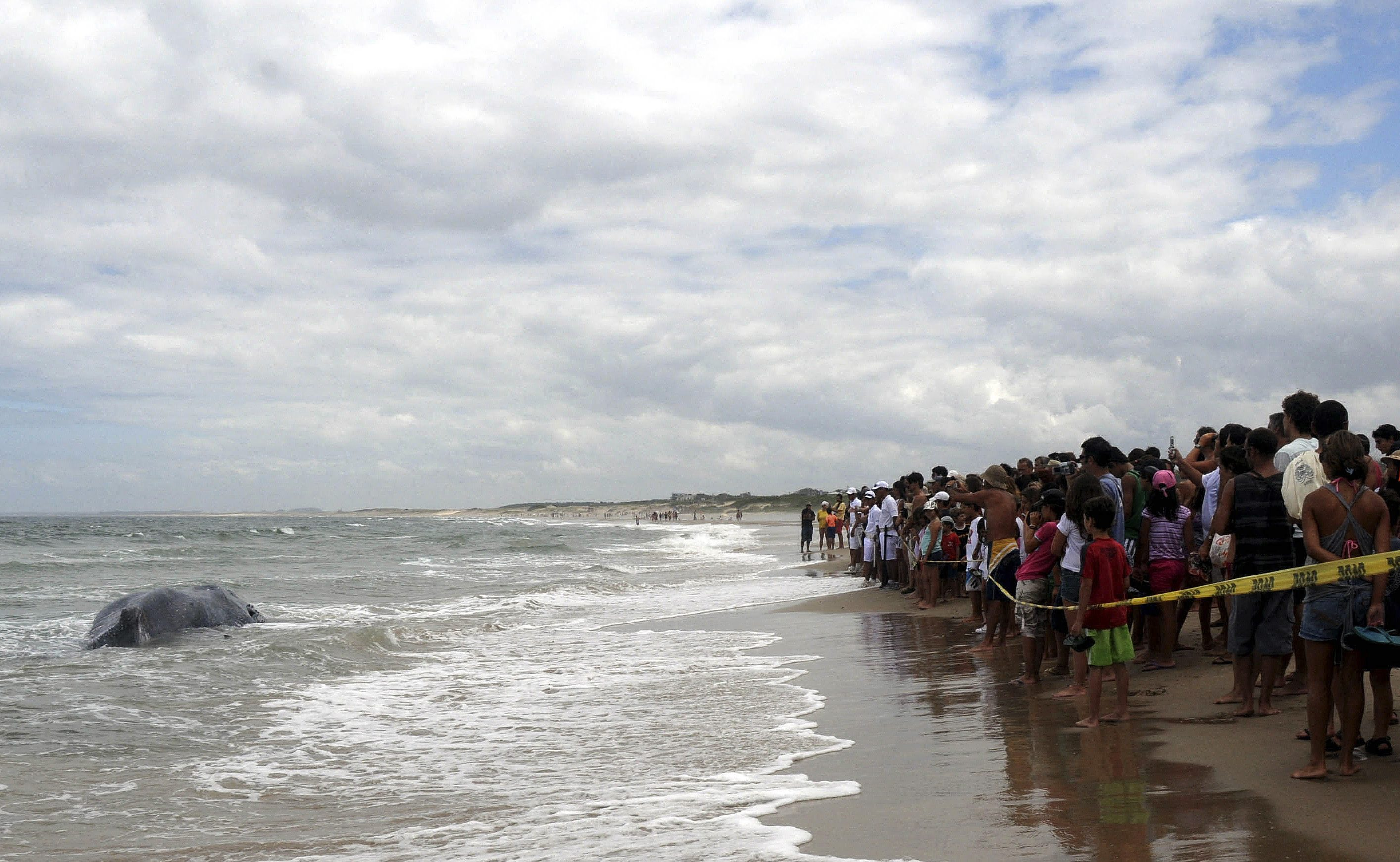FOTOS: ballena quedó varada en una playa uruguaya