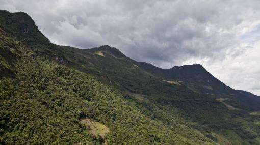 Países en desarrollo subestiman el valor de sus bosques